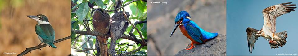 Canopy Goa's Goa Birding Camp: Nov 2014