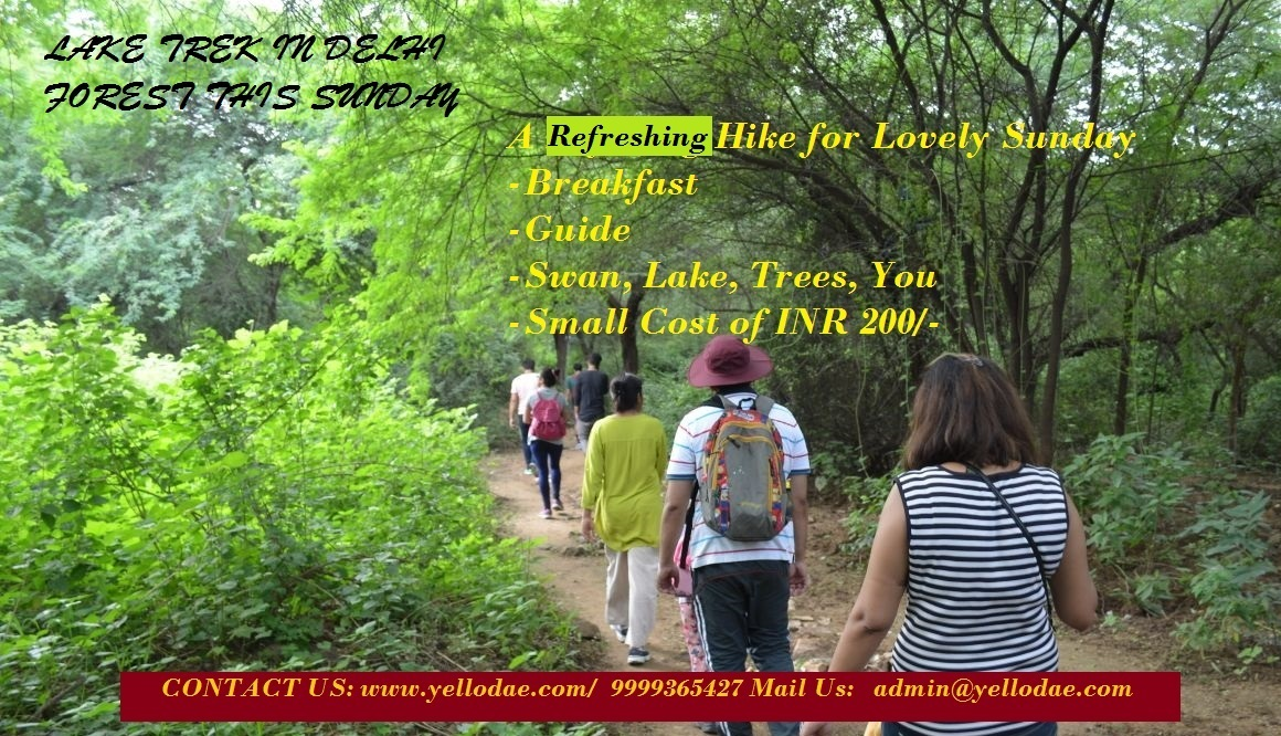 Lake Trek in Delhi Forest(IN 200)