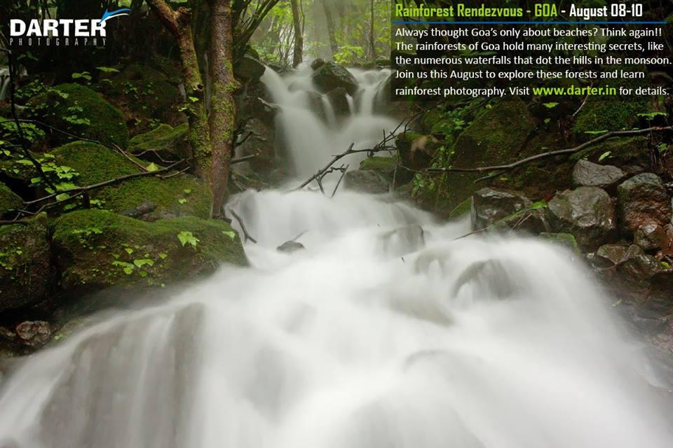 Rainforest Rendezvous - Photography Tour of Goa