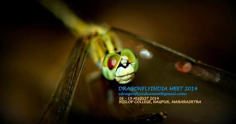 DragonflyIndia Meet 2014_College Workshop Nagpur